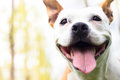 Friendly dog smile Royalty Free Stock Photo