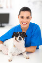 Friendly female vet pet dog Stock Photo