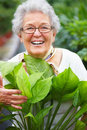 Friendly older woman in her garden Stock Images