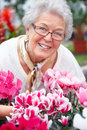 Friendly senior woman looking at pink flowers Stock Photography