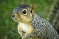 Friendly Squirrel Royalty Free Stock Photo