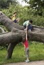 Friends Climbing On Fallen Tree Royalty Free Stock Photo