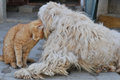 Friendship cat and fluffy dog Royalty Free Stock Images