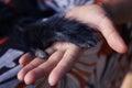Friendship Between Human Monkey, Handshake. Protection of endangered animals. Royalty Free Stock Photo