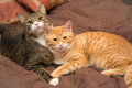 Friendship of the two cats striped orange and grey Royalty Free Stock Images