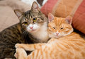 Friendship of the two cats striped orange and grey Stock Photo