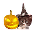 Frightened kitten with witch pumpkin and hat for halloween. on white