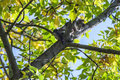 Frightened kitty sitting on tree, can`t go down Royalty Free Stock Photo