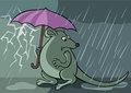 Frightened rat with unbrella under the rain vector graphic Royalty Free Stock Images