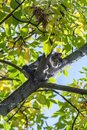 Frightened young cat sitting on tree, can`t go down Royalty Free Stock Photo