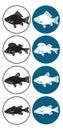 Frischwasserfische Lizenzfreies Stockbild