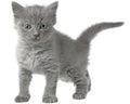 Frisky small kitten on white background Stock Image