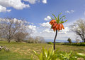 Fritillaria imperialis branch of on nature landscape Royalty Free Stock Images