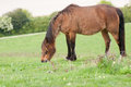 Frn horse in natural agricultural landscape Royalty Free Stock Photos