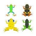 Frog cartoon tropical animal cartoon amphibian mascot character wild vector illustration.