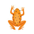 Frog cartoon tropical brown animal cartoon nature icon funny and isolated mascot character wild funny forest toad