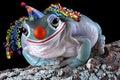 Frog Clown Royalty Free Stock Photo