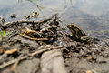 Frog frogs with a bright color under the hot sun at a bog Stock Photo