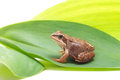 Frog on green leaf