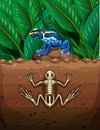 Frog on the ground and fosil underground illustration Royalty Free Stock Photo