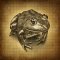 Frog grunge Royalty Free Stock Photography