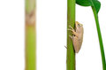 Frog holding plant stem Stock Photo