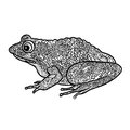 Frog isolated. Black and white ornamental doodle frog illustrati Royalty Free Stock Photo