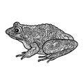 Frog isolated. Black and white ornamental doodle frog illustrati Royalty Free Stock Photo