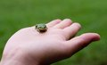 Frog little green on the hand on green background Stock Images