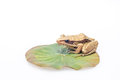 Frog on a lotus leaf under the white background Stock Photography