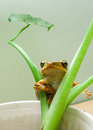 Frog the on the plants Stock Images