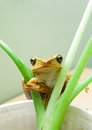 Frog the on the plants Royalty Free Stock Images