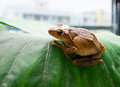 Frog the on the plants Royalty Free Stock Image