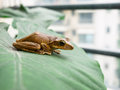 Frog the on the plants Royalty Free Stock Photo