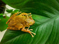 Frog the on the plants Royalty Free Stock Photography