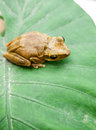 Frog the on the plants Stock Image