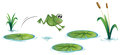 A frog at the pond with waterlilies illustration of on white background Royalty Free Stock Photos