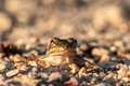 The frog prince close up picture of a little on way on a warm summer morning in bavaria Royalty Free Stock Photo