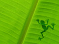 Frog shadow on the banana leaf Royalty Free Stock Photo