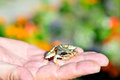 Frog sitting on a hand Stock Images