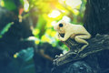 Frog statue on the old timber in vintage color style yellow sitting blur background Royalty Free Stock Photography