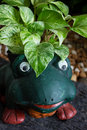 Frog statue plant happy green Royalty Free Stock Image