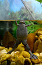 A frog swims to the surface of the water dark grey pond it is in Stock Photos