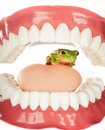 Frog in throat Royalty Free Stock Photo