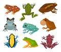 Frog vector froggy character and cartoon amphibian toad in tropical nature illustration set of fauna exotic treefrog and