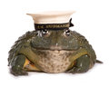 Frog wearing a hm submarine hat cutout Stock Photo