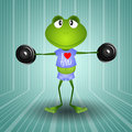 Frog weightlifting in the gym Stock Image