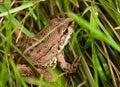 Frog Wild Nature