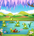 Frogs living in the pond