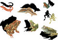 Frogs and newts on white background Royalty Free Stock Images